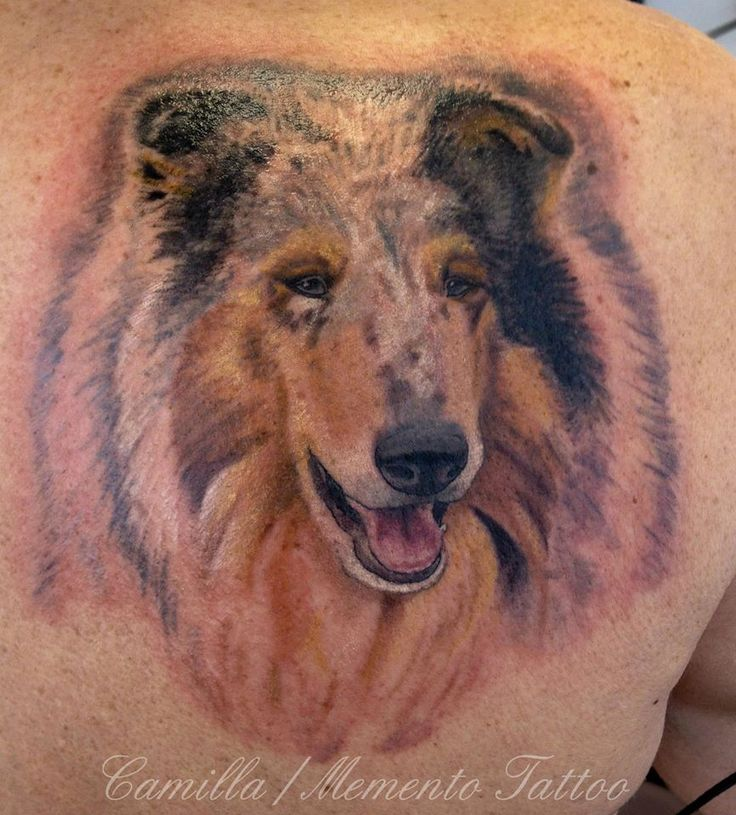 Dog portrait in color. Collie - her first tattoo.