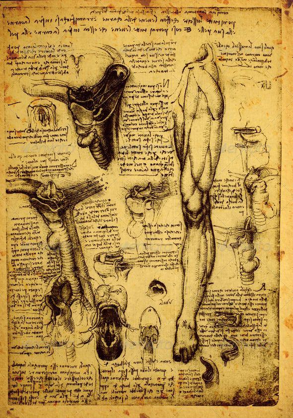 63 besten Leonardo Da Vinci Anatomy Drawings Bilder auf Pinterest ...
