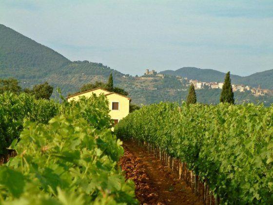 Wine Wednesday: Amaranto Sangiovese | Podere San Cristoforo in Tuscany.  #wine #organic #Italy