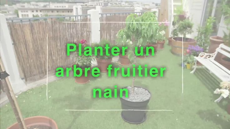 1000 id es sur le th me cognassier sur pinterest arbuste arbres fruitiers - Comment tailler les arbres fruitiers ...