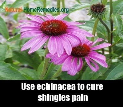 36 Best Natural Shingles Relief Images On Pinterest