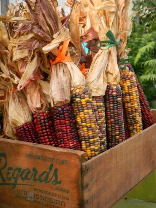 Indian corn in wood crate