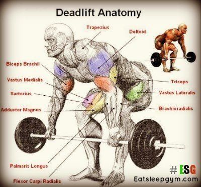 Anatomy of a Deadlift....great strength n muscle building exercise...frequently missed out of workouts