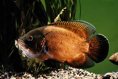 17 Best Images About Oscars Severums Large On Pinterest