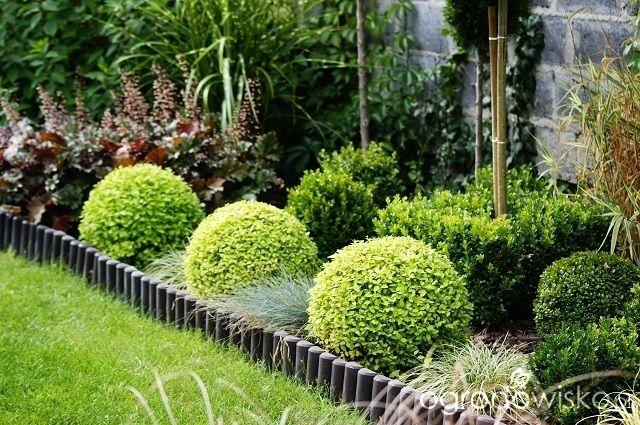 Atelier Ogrodowe... - strona 46 - Forum ogrodnicze - Ogrodowisko