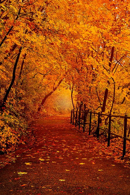 Forest in Autumn, Budapest, Hungary