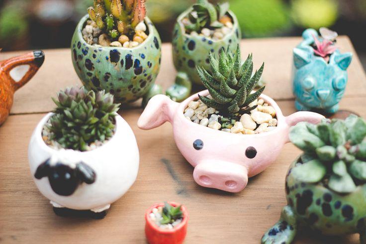 Suculentas em vasinhos de cerâmica