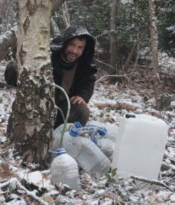 THE SAP IS RISING. Winter 'foraging' for sap in some VERY COMMON TREES (and they're NOT maple trees!) See what 'Fergus the Forager' has to say about his wild 'sweet tooth' adventures.