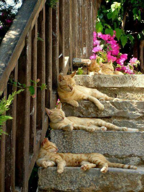Gatos disfrutando la vida (no sé de dónde salió esta imagen).