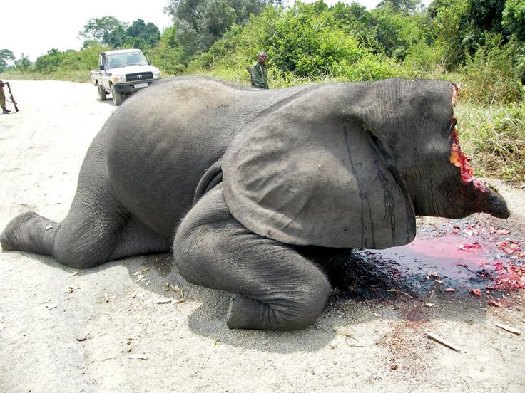 TzTours | Stand For Elephants