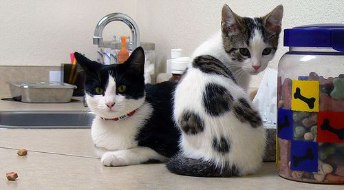 How To Save On Pet Care With Images Pets Pets Cats Pet Care