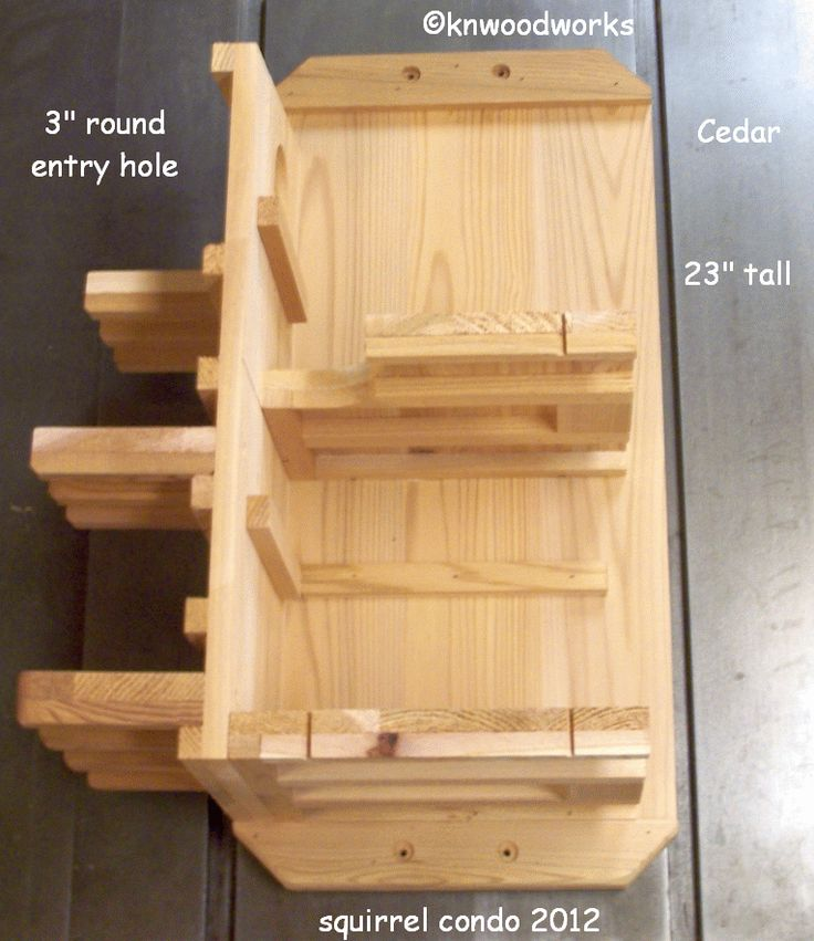 squirrel condo inside   Projects   Pinterest   Search and ...