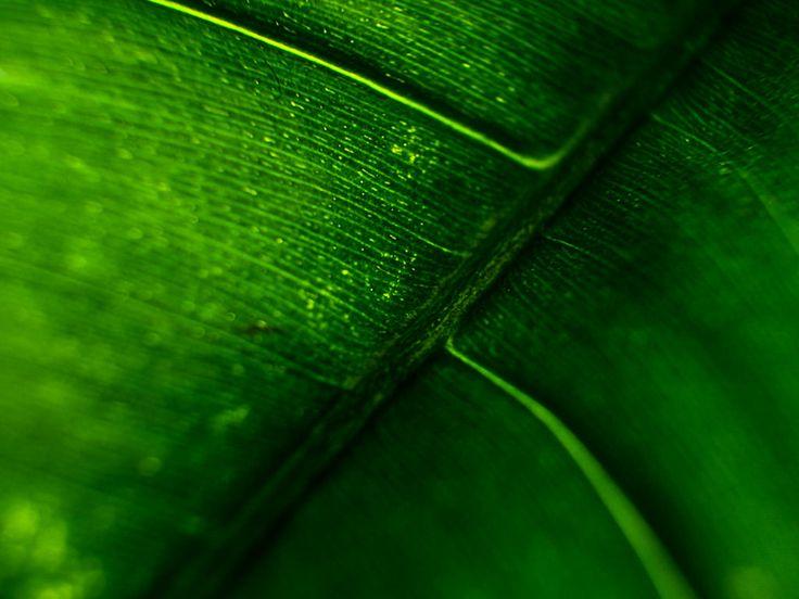 https://flic.kr/p/t6r5mx | Macro | En el Jardín Botánico José Celestino Mutis