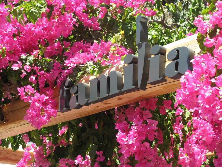 Waiting Bougainvillea To Bloom With The Coming Of Spring At Familia Restaurant In Mykonos