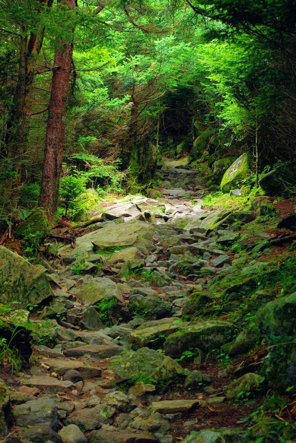 Great Smoky Mountains National Park, North Carolina, USA