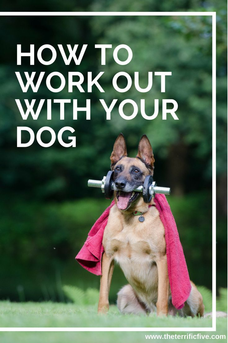How to work out with your dog - Tired of the old, boring exercise routine? Do not have time to walk your dog and go to the gym? Try combining walking your dog with HIIT exercises for a high-calorie burning walk! www.theterrificfive.com
