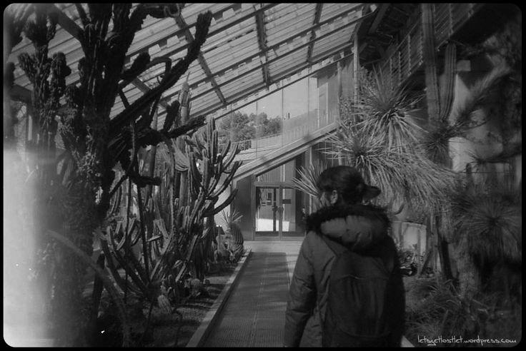 B&W,ByN, analog, analogico, film, pelicula, cactus, viveros, madrid, garden, walk, paseo https://letsgetlostlet.wordpress.com/2016/04/20/the-inner-jungle/