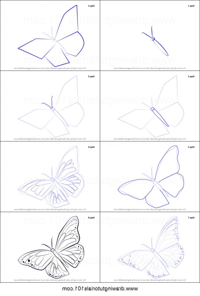 Butterfly Drawing Tutorial How To Draw A Monarch Butterfly