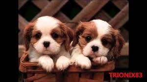 Resultado de imagen para imagenes bonitas de cachorros de perros