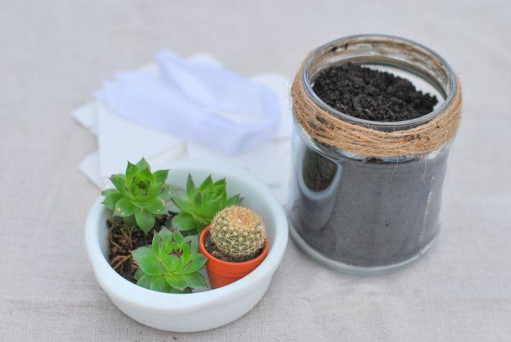 Cadeau original et pas cher pour vos invités mariage : des succulentes, mariage petit budget