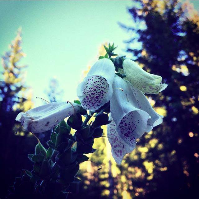 Krkonošská flora