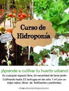 Curso Hidroponía BásicoDescubre como cultivar hasta 32 lechugas en tan solo 1 m²…