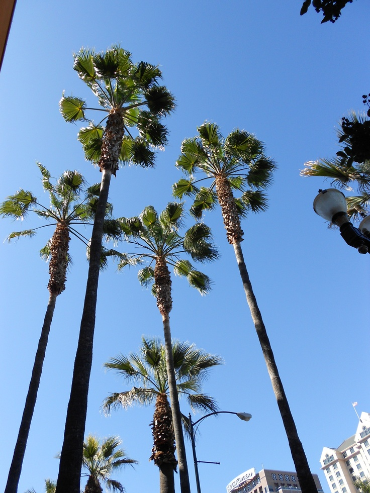 They can tell you're a tourist when you stop and exclaim over the palm trees.