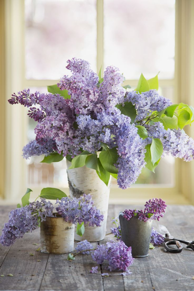 In the language of flowers, purple lilacs are the symbol of first love. Country Living.