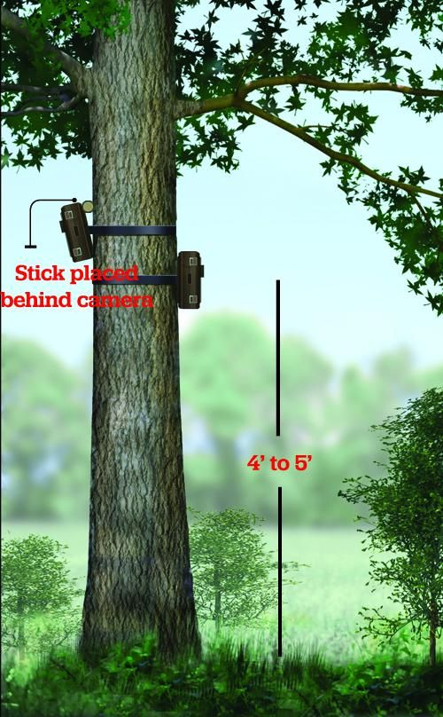 How to Pick the Best Spots for Your Trail Cams | Field & Stream
