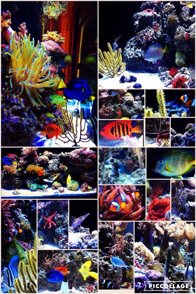 Reef tank collage