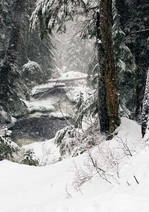 I love to be deep in the woods in the snow where there are no footprints. The colors are muted, the sounds are muted... I feel like I am walking around in an oil painting.