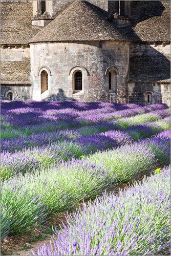 Matteo Colombo - Senanque Abtei und Lavendel, Provence