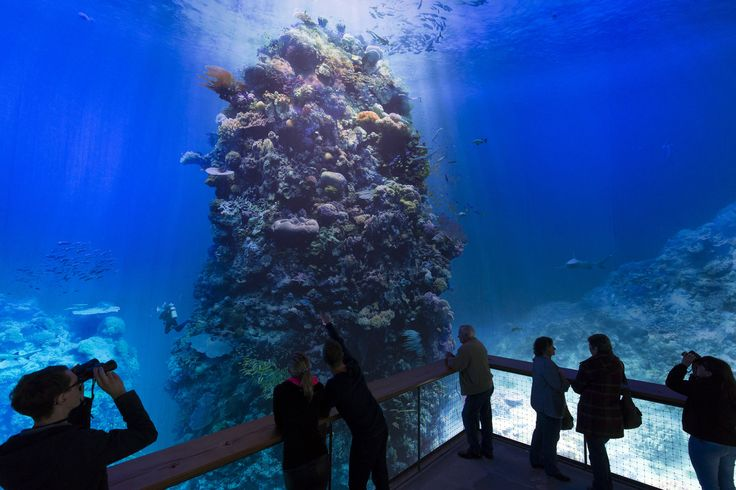 Great Barrier Reef Panometer Leipzig Germany Yadegar Asisi   Architectural Digest
