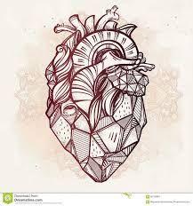 Resultado de imagen para organo de corazon con prismacolor