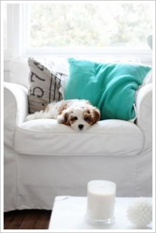 21 best cavapoos are the best images on pinterest norfolk beach cottages dog friendly dog friendly beach cottages