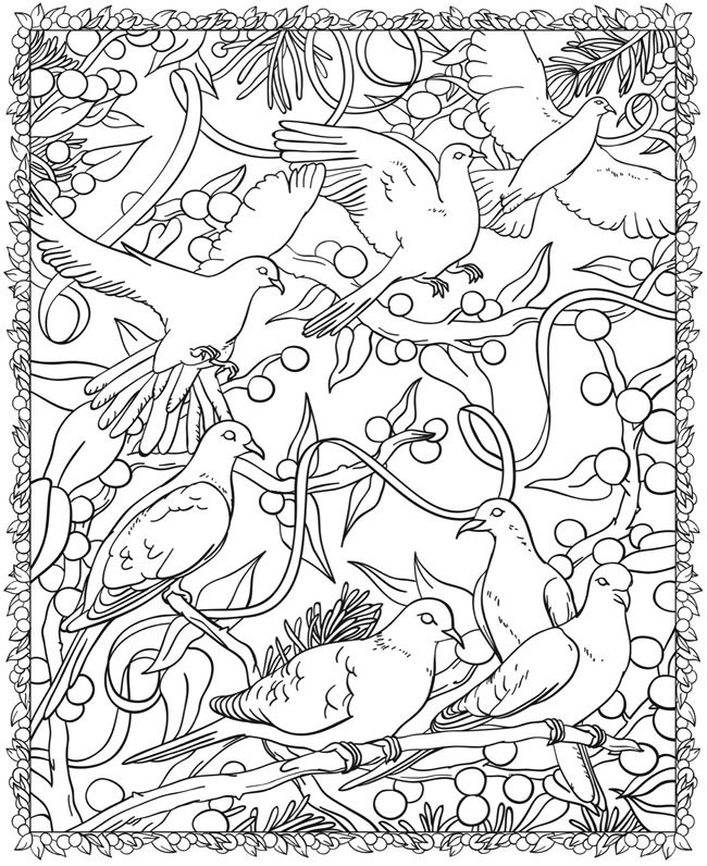 Welcome to Dover Publications | COLORING PAGES | Bird coloring pages ...