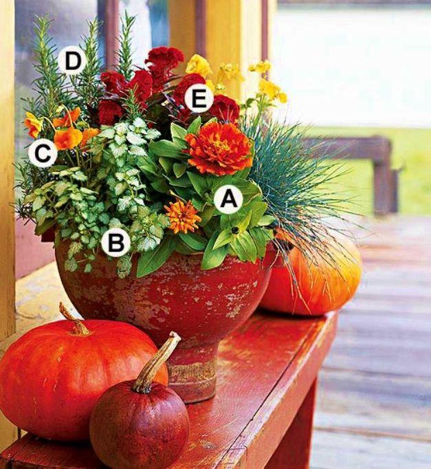 17 Best Ideas About Garten Stiefmütterchen On Pinterest ... Garten Stiefmuetterchen Ratgeber Pflanzen