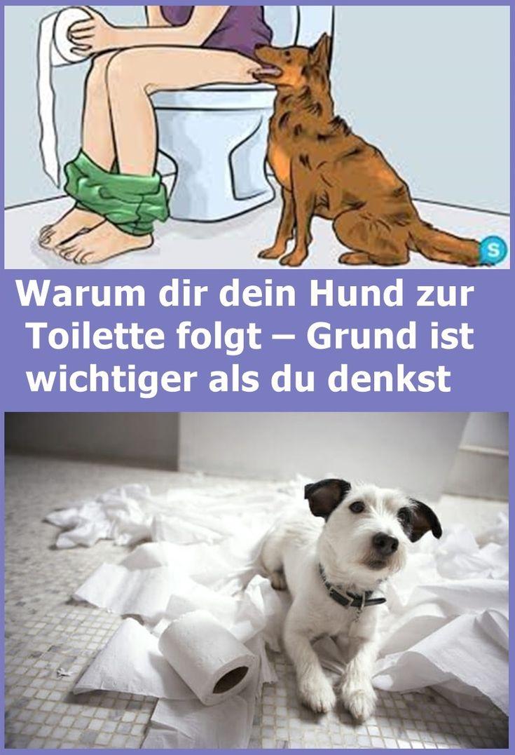Warum dir dein Hund zur Toilette folgt – Grund ist wichtiger als du denkst | d…