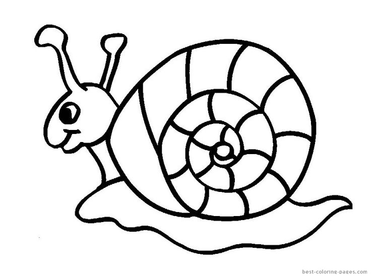 Free Printable Animal Snails Coloring In Sheets For Kids