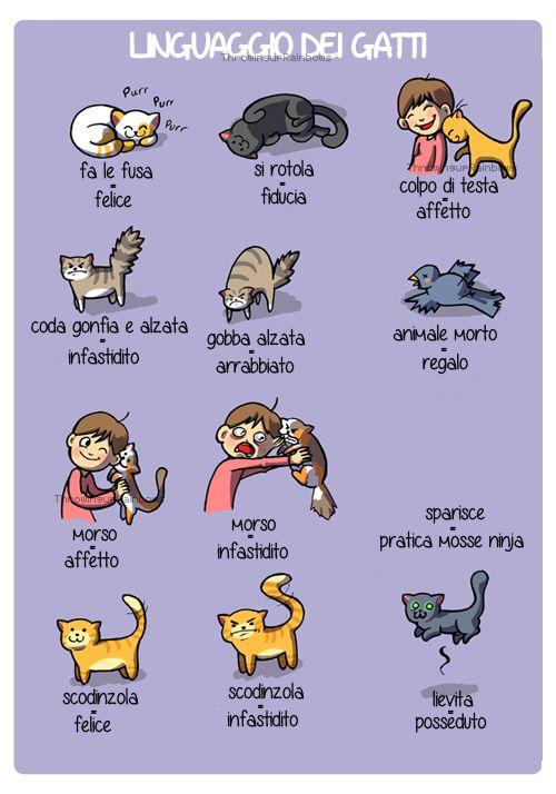 Il #linguaggio del #gatti ^_^