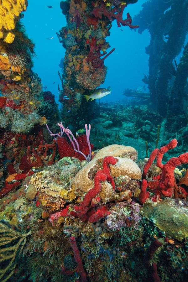 Salt Island, BVI RMS RHONE - Wreck Dive