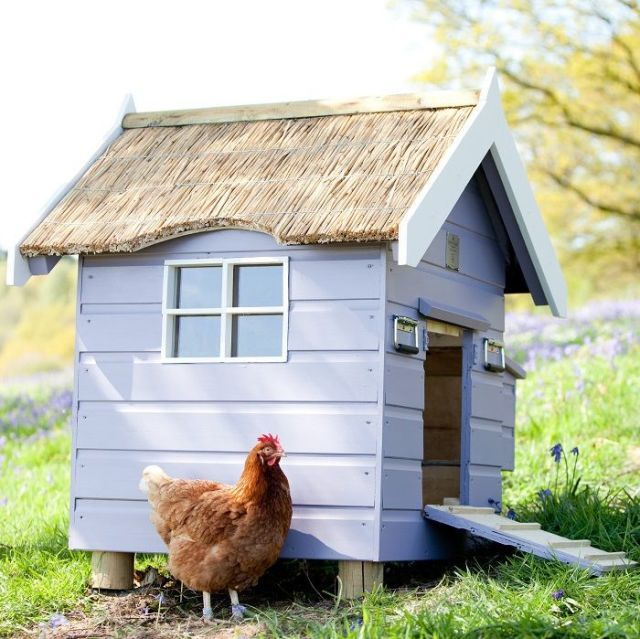 1000 images about gardens and gardening tips on pinterest Make your own hen house