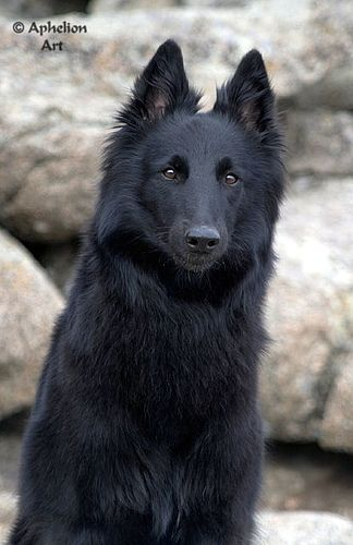 if a dire wolf was black - Her Pretty face