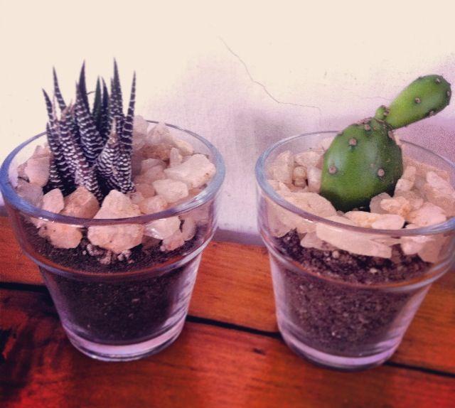 Cactus !!