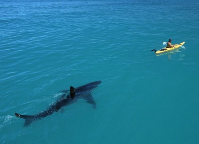 15photos which will make you think twice about going swimming