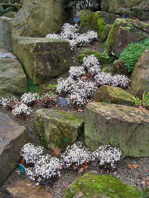 609 Best Rock/Alpine Gardens Images On Pinterest | Dry Creek Bed, Garden  Ideas And Landscaping Ideas