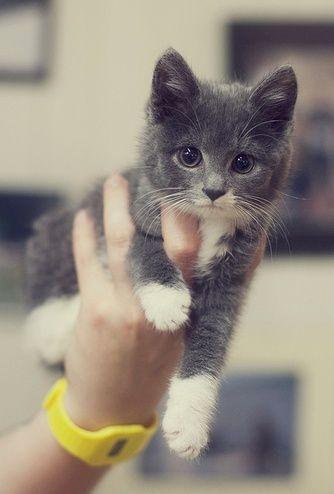 Smitten with this kitten!