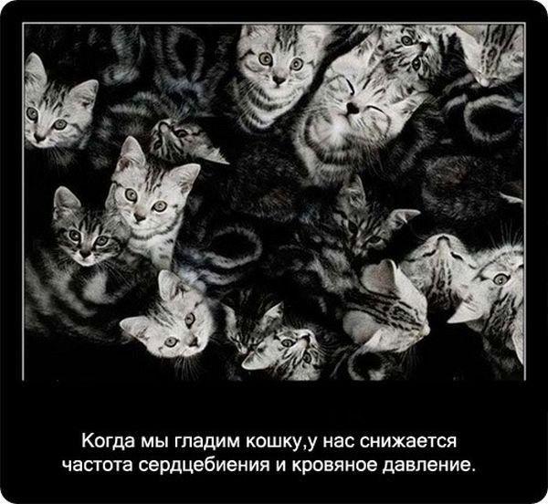Факты о кошках, которые вы до сих пор не знали (64 фото)