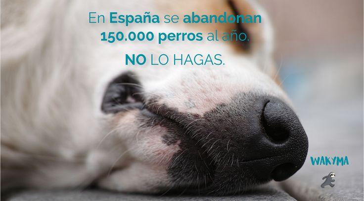 abandono animal en España