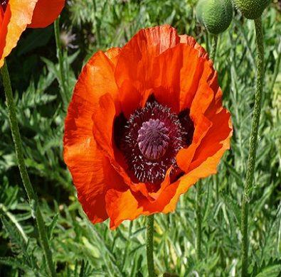 augustus verjaardag bloemen betekenis